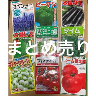 野菜・ハーブの種 まとめ売り(野菜)