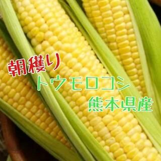 産地直送 とうもろこし ゴールドラッシュ 4kg(野菜)