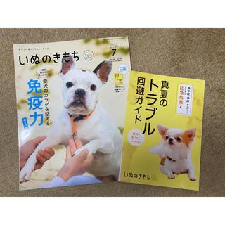 【最新号】いぬのきもち 7月号(専門誌)