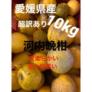 愛媛県産 超訳あり河内晩柑10kg(フルーツ)