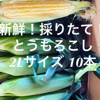 千葉県産 とうもろこし 10本(野菜)
