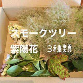 スモークツリー グリーンボール 紫陽花 3種類 生花 切り花(その他)