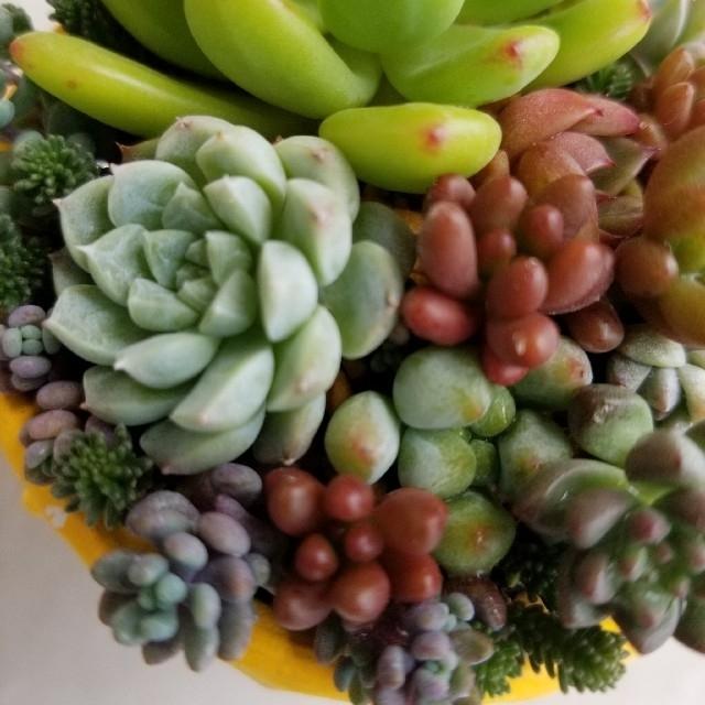 多肉 寄せ植え ちまちま寄せ ハンドメイドのフラワー/ガーデン(その他)の商品写真
