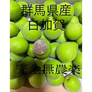 群馬県産 白加賀 8キロ越え    完全無農薬(野菜)