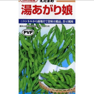 健康野菜  野菜種 湯あがり娘 エダマメの種 15個 (野菜)