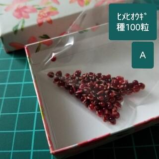 <お楽しみ> 種(混合100粒) ヒメヒオウギ2021A(その他)