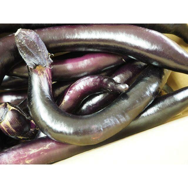 大長ナス 熊本県産 訳アリ 家庭用でも美味しい♪3キロ 食品/飲料/酒の食品(野菜)の商品写真