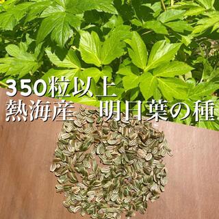 熱海産 明日葉の種 350粒以上『去年12月に取れた新しい種です』(野菜)