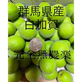 群馬県産青梅 白加賀 6キロ     完全無農薬 (フルーツ)