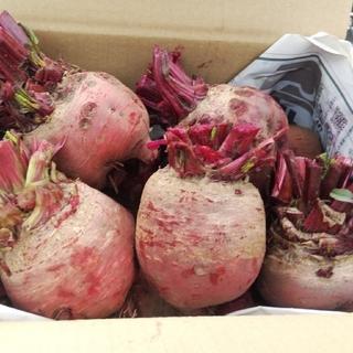 ビーツ2.5kg・イエロービーツ入(農薬化学肥料不使用)(野菜)