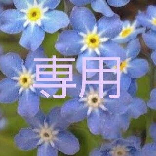 ワスレナグサブルームッツ(その他)