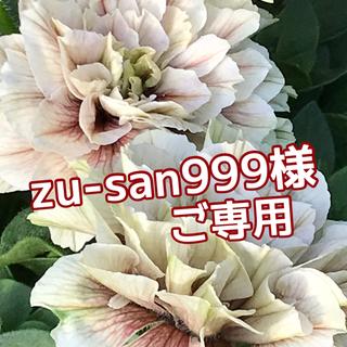♥️zu-san999様ご専用(その他)