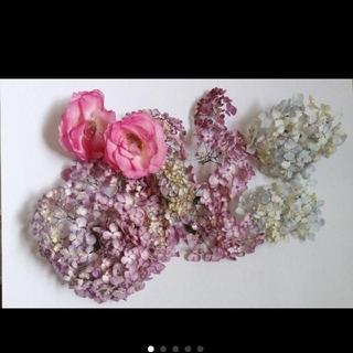 紫陽花ドライフラワーセット(ドライフラワー)