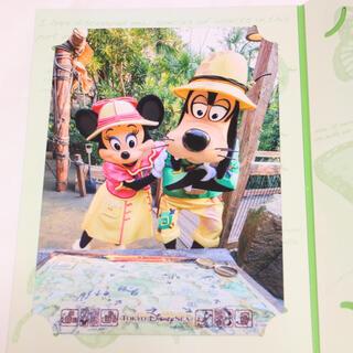 ディズニー(Disney)のディズニー グリーティングトレイル フォトファン トレミニ ミニー スペフォ(写真)
