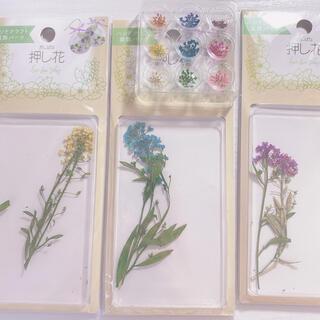 ハンドメイド 装飾素材 押し花 セット(ドライフラワー)