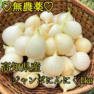 【無農薬】 無農薬 にんにく 国産 高知県産 ジャンボにんにく  1キロ バラ(野菜)