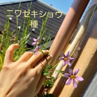ニワゼキショウ 種(その他)