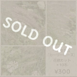 ペニセタム『カーリーローズ』花穂×10  ¥300 アレンジメントに♪(その他)