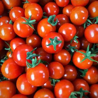 【りらっくま様専用】採れたて!ミニトマト1キロ(野菜)