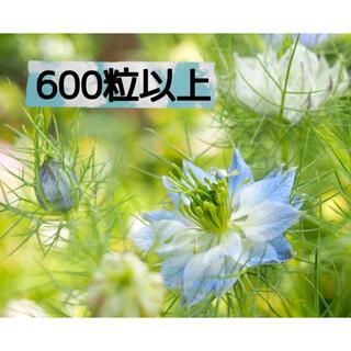 ニゲラ タネ 600粒以上(その他)