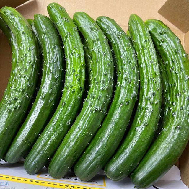 熊本県産 きゅうり コンパクト便 送料込♪ 約1キロ 食品/飲料/酒の食品(野菜)の商品写真