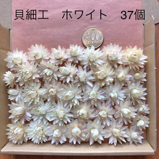 (9)貝細工 ヘリクリサム ドライフラワー ホワイト 37個(ドライフラワー)