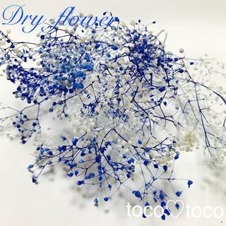 かすみ草 ドライフラワー 蕾〈ホワイト×ブルー〉(ドライフラワー)