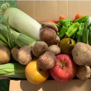 ★60サイズ★ 無農薬新鮮野菜果物セット 10種類セット(野菜)