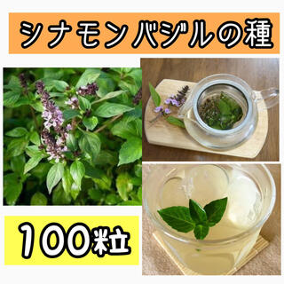 シナモンバジルの種100粒(プランター)