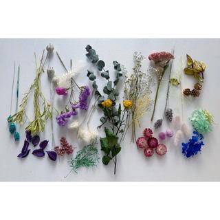ドライフラワー プリザーブドフラワー 21種類花材ユーカリかすみ草B(ドライフラワー)
