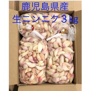 鹿児島県産 生ニンニク3㎏(野菜)