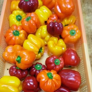 静岡県産パプリカ(3kg、型崩れ、ちょこっと傷)(野菜)