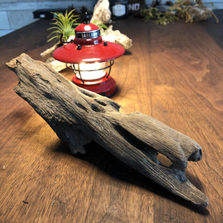 光が透る流木…天然物、オブジェ、インテリア⑨(彫刻/オブジェ)
