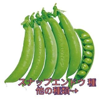 野菜種☆スナップエンドウ☆変更→ミニトマト ラディッシュ 茎ブロッコリー 人参(野菜)
