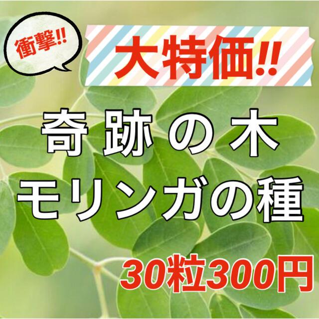 【スーパーフードの種子】奇跡の木 モリンガの種30粒 ハーブ タネ 美容健康 食品/飲料/酒の食品(野菜)の商品写真