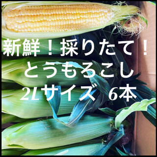 千葉県産 とうもろこし 6本(野菜)