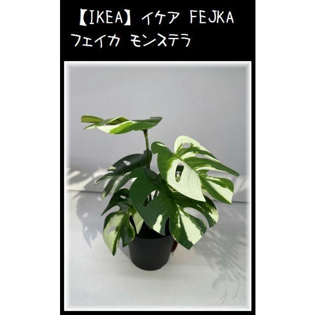 IKEA(イケア)の【IKEA】イケア FEJKA フェイカ モンステラ インテリア/住まい/日用品のインテリア小物(その他)の商品写真