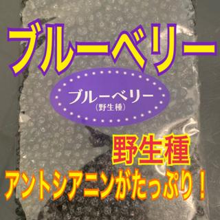 ワイルドブルーベリー【送料無料】(フルーツ)