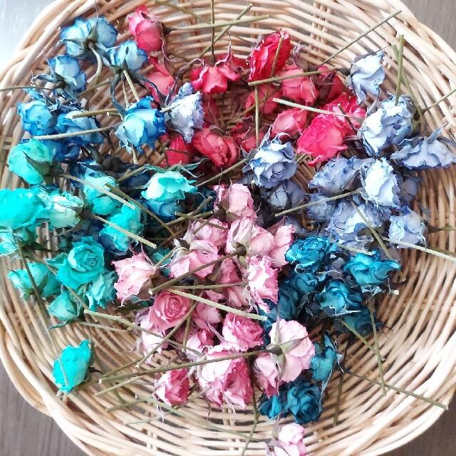 スプレーバラのドライフラワー*極小① ハンドメイドのフラワー/ガーデン(ドライフラワー)の商品写真