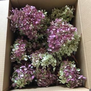 水無月 ミナヅキ ヘッド 小房 ドライフラワー 72サイズ箱 花材 リース い(ドライフラワー)
