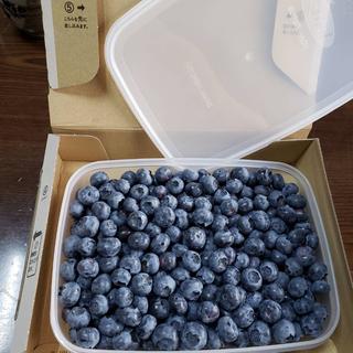 ブルーベリー 無農薬 約750グラム 火曜日まで(フルーツ)