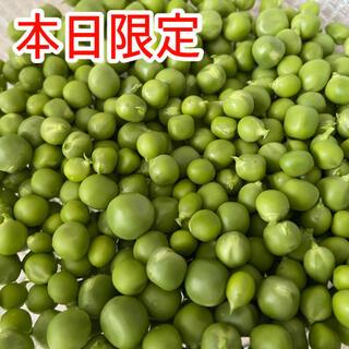【本日限定】剥き実 不揃い小粒 朝採りスナップエンドウ (野菜)