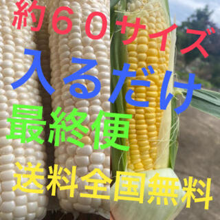 30秒畑の農家直送約60サイズゴールドホワイト入るだけ(野菜)