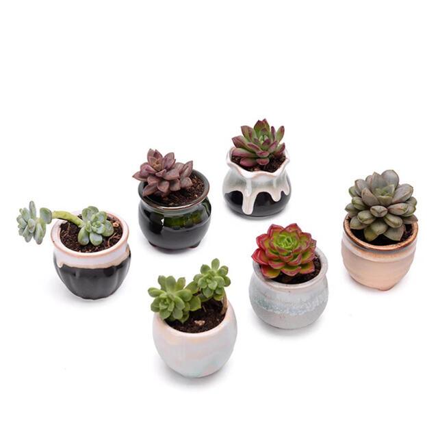 IKEA(イケア)の【多肉植物・サボテン🌵】和風 ミニ 植木鉢【3個セットです】  インテリア/住まい/日用品のインテリア小物(その他)の商品写真