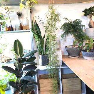 ホヤ レツーサ ハンギング プランター セット ③  観葉植物(プランター)