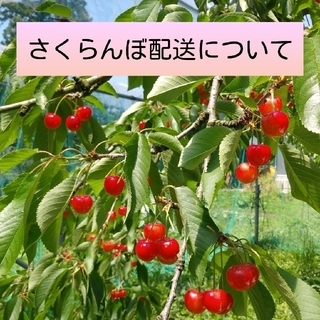 さくらんぼ配送について(フルーツ)