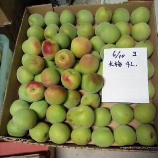 確認用。青梅大梅。4L。3K。自然栽培。広島県産、産直、送込、農家直送(フルーツ)