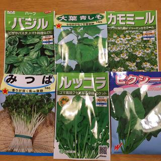 野菜の種 6種類 ベランダ菜園(野菜)