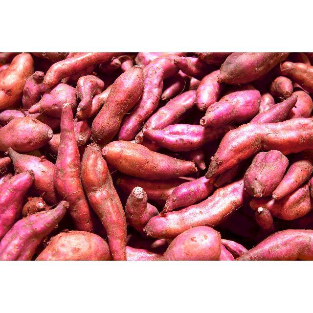 ★送料無料★【 #さつまいも 新芋 5キロ ミニ芋】【味付小料理に!】 #薩摩芋 食品/飲料/酒の食品(フルーツ)の商品写真