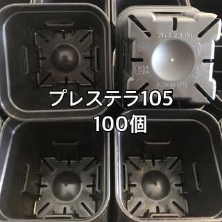 プレステラ105 黒 100個(プランター)